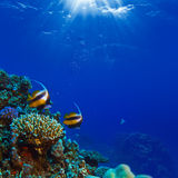 Underwater scene with yellow fish and water surface. Beautiful coral reef with sunrays through water surface and yellow fish stock photography