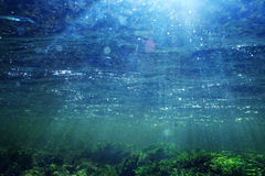 Underwater scenery in clear river water royalty free stock photography