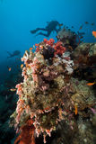Underwater scenery and a diver in the Red Sea. Stock Photo