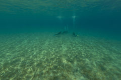 Underwater scenery and divers in the Red Sea. Royalty Free Stock Images
