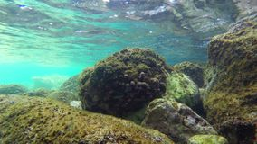 Underwater scenery. Diving Underwater footage Shot in Montenegro, Adriatic sea stock footage