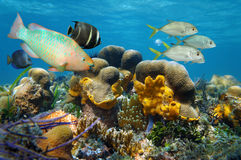 Underwater scenery with fish in a coral reef Stock Photo