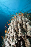 Underwater scenery in the Red Sea. Stock Photos