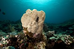Underwater scenery in the Red Sea. Royalty Free Stock Photos