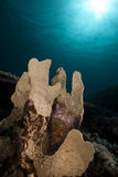 Underwater scenery in the Red Sea. Royalty Free Stock Images