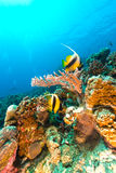 Underwater scenery of  the Red Sea. Stock Photos