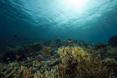 Underwater scenery at Yolanda reef Royalty Free Stock Photography