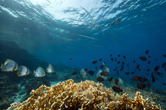 Underwater scenery at Yolanda reef Stock Image