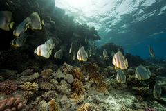 Underwater scenery at Yolanda reef Stock Photos