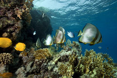 Underwater scenery at Yolanda reef Royalty Free Stock Image