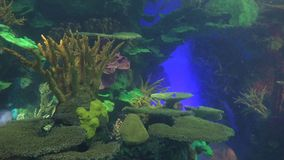 Underwater scenes of the coral reef stock video footage