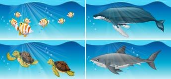 Underwater scenes with sea animals Stock Photo