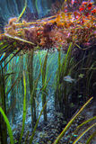 Underwater Scenic - Blue Hole Springs Royalty Free Stock Photography