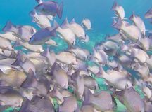Underwater school of fish Stock Photo