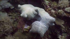 Underwater sconosciuto in oceano di fauna selvatica Filippine archivi video