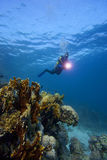Underwater : Scuba-Diver & coral reef. A female scuba diver is exploring a tropical reef underwater - red sea of egypt. Blue water background and several royalty free stock images