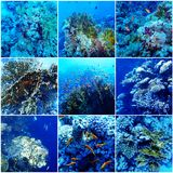 Underwater Sea Collage Stock Photography