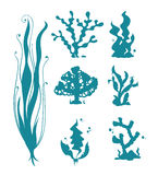 Underwater sea corals and algae vector silhouettes  on white Royalty Free Stock Photo