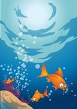 Underwater sea fish Royalty Free Stock Photos