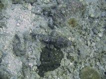 Underwater sea floor. View of sea floor underwater taken in Andaman Beach, Thailand stock images