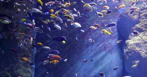 Sea Life in blue water. Underwater: Sea Life in deep blue water stock video footage