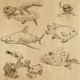 Underwater, Sea Life (vector set no.1) - hand drawn. Underwater, Sea Life (vector set no.1)  - Collection of an hand drawn illustrations. Description: Each Royalty Free Stock Images