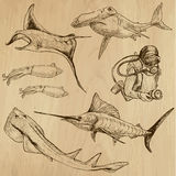 Underwater, Sea Life (vector set no.3) - hand drawn Stock Photo