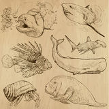 Underwater, Sea Life (vector set no.4) - hand drawn. Underwater, Sea Life (vector set no.4)  - Collection of an hand drawn illustrations. Description: Each Stock Photo