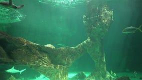 Underwater Sea Or Ocean. Stock video in 4k or HD resolution stock video footage