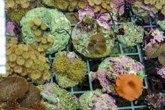 Underwater sea and ocean wildlife coral reef and fish. Underwater sea and ocean wildlife coral reef in artificial  aquarium Royalty Free Stock Images