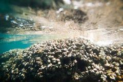Underwater sea rocks bottom Royalty Free Stock Images