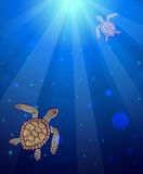 Underwater sea scene with two marine turtles Royalty Free Stock Images