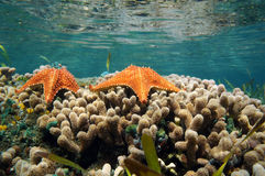 Underwater sea star on a coral reef Royalty Free Stock Image