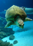 Underwater Sea turtle stock image