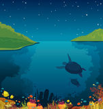 Underwater sea, turtles, coral reef, island, night sky. Coral reef with fish and silhouette of two turtles under the green islands and night starry sky. Vector Stock Photography