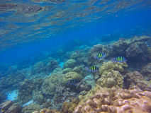 Underwater sea view, coral reefs Royalty Free Stock Photography