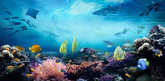 Underwater sea world. Life in a coral reef.