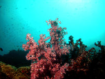 Underwater Seascape 3 Royalty Free Stock Photos