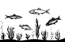 Underwater seascape with fish and algae. Hand vector drawing. Isolated Stock Photo