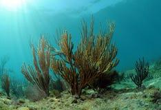 Underwater seascape with gorgonia Royalty Free Stock Photos