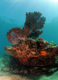 Underwater seascape with sea fan, hard coral and soft coral Royalty Free Stock Images