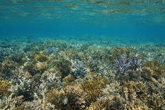 Underwater seascape seabed covered by corals stock photography