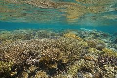 Underwater seascape shallow coral reef Oceania royalty free stock photography