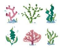 Underwater seaweeds, aqua kelp, ocean and aquarium plants vector set Stock Photos