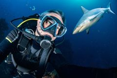 Underwater selfie with Grey shark ready to attack Stock Photos