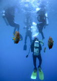 Underwater Sentinals - Scuba Class Stock Photography