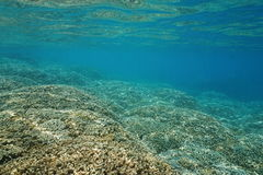 Free Underwater Shallow Ocean Floor Covered By Corals Royalty Free Stock Image - 66623016