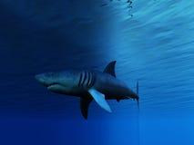 Underwater Shark. With gentle waves Stock Image