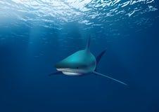 Underwater Shark sea. Background illustration of a shark underwater in the deep blue sea royalty free illustration