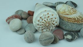 Underwater shells and stones. Small group of river shells and stones stock footage